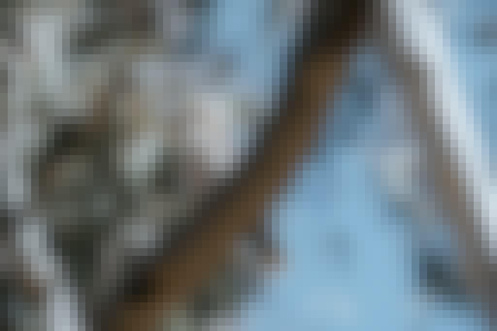 Kookaburra Visit Deni Bird Watching Hero